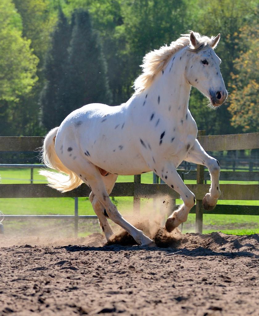 Natuurgeneeskunde paard - aanvulling op uw dierenarts
