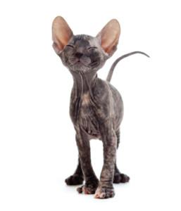 Vage Klachten Kat