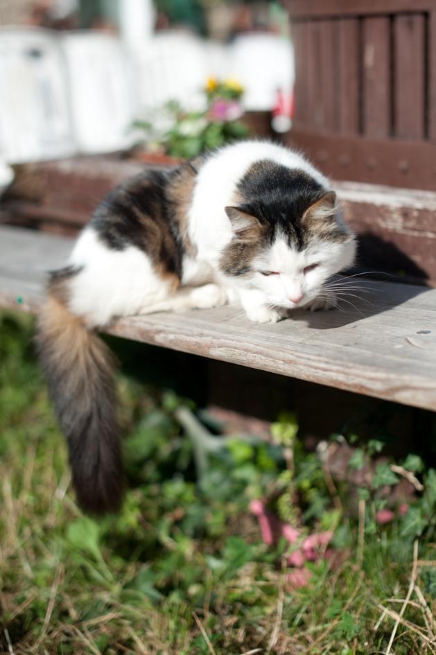 Jachtinstinct Kat