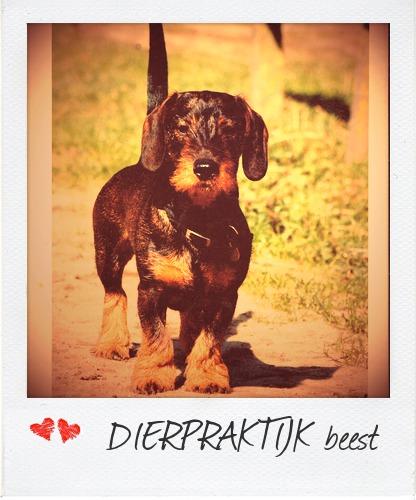 natuurgeneeskunde voor honden