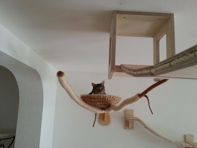 Verrijking huis kat