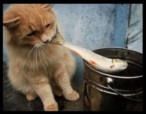 voeding van de kat | rauwe vis