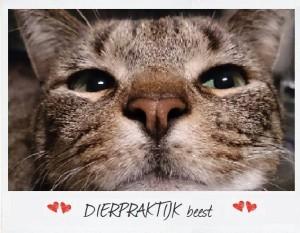 voeding van de kat | kattenvoer