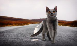 Natuurlijke voeding kat Dierpraktijk Beest