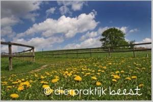 paardenbloem paard