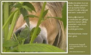 giftige planten voor paarden
