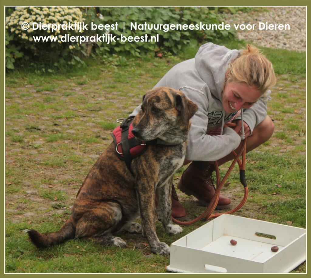 Verveling bij Honden - Dierpraktijk Beest