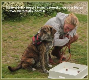 Verveling bij honden | workshop Hond | Dierpraktijk Beest