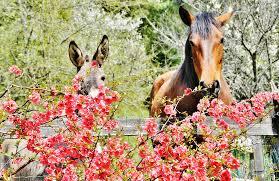 paard bach