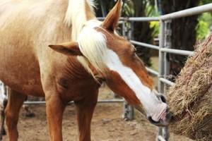 hooinet slowfeeder paard