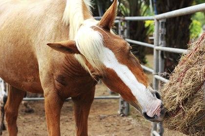 hooinet paard