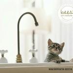 natuurgeneeskunde kat