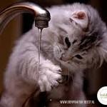 water kat