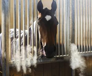 Verveelt mijn paard zich? Wat te doen bij verveling van paarden?