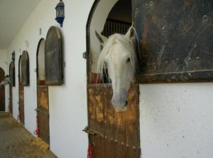 Stalondeugden Verveling Kribbebijten Luchtzuigen Paardenstal