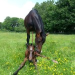 Dierpraktijk Beest natuurgeneeskunde voor paarden