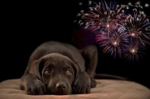 Homeopathie Vuurwerk Angst Hond