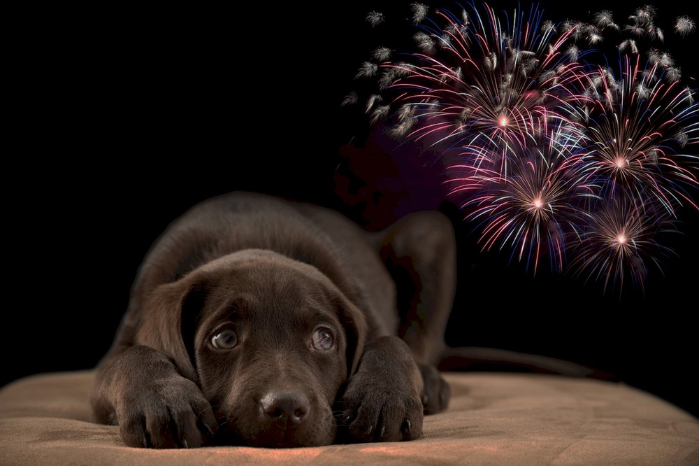 Fireworks Dog Anxiety