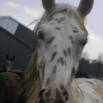 emotie paard mens