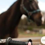 weidebeheer voor paarden