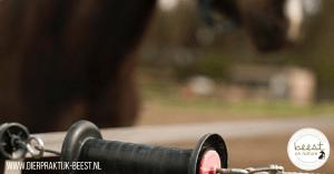 weidebeheer paard