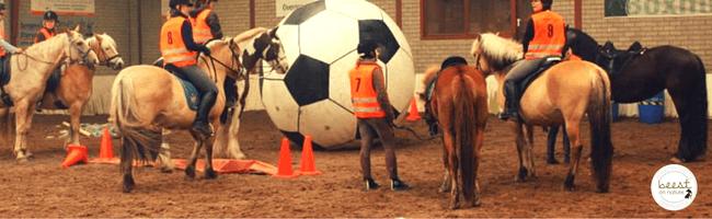 paard voorbeeld demonstratiepaard