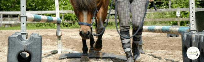 kalmerend effect voorbeeld paard paarden