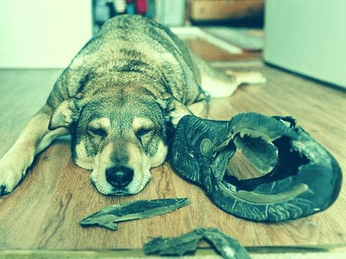 slopen bij honden