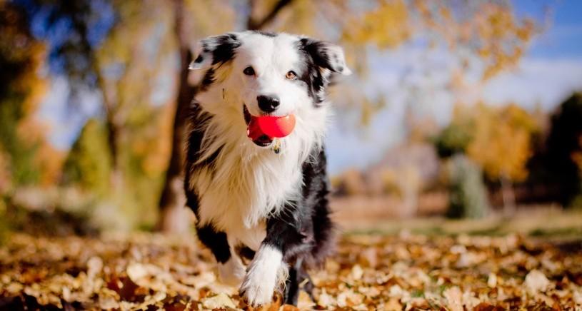 hond-herfst-dierpraktijk-beest-wandelen-winter hond verhaart