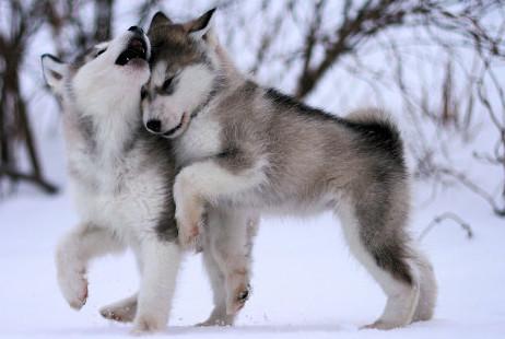 thermoneutrale zone hond koud hond natuurgeneeskunde honden bioresonantie honden