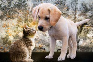 klachten ras kat klachten ras hond