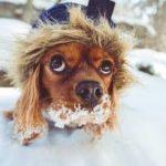 hond warm winter