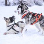 wintervacht hond