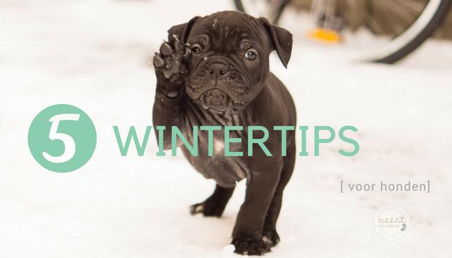 sneeuw pekel honden wintertips hond